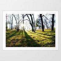 Sunlight and Trees Art Print