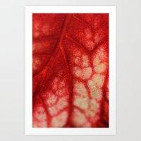 Begonia Rex Art Print