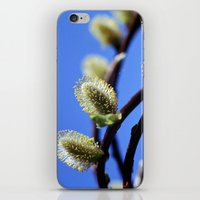 Willow Catkins iPhone & iPod Skin