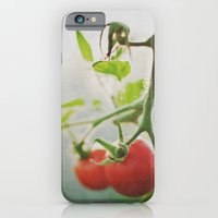 iPhone & iPod Case featuring TOMATOES. by Monique Krüger Photography