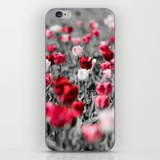tulip field in Holland iPhone & iPod Skin