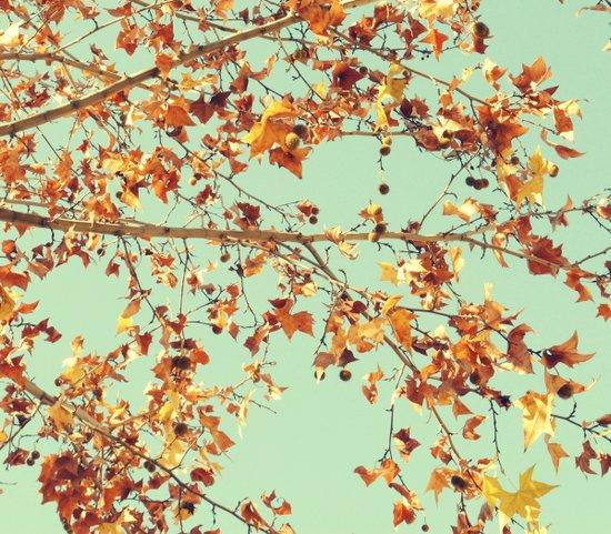 En los árboles Art Print