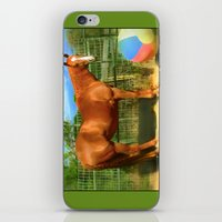 A Horse and Her Ball iPhone & iPod Skin