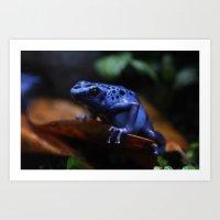 Blue Poison Dart Frog Az… Art Print