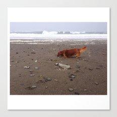 Dachsund on Beach Canvas Print