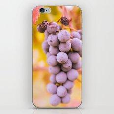 In vineyard iPhone & iPod Skin