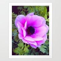 Pink Poppy Anemone I Art Print