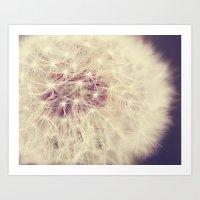 Soft White Dandelion Art Print
