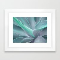 Blue Green Agave Attenuata Framed Art Print