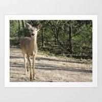 Deer Sighting Art Print