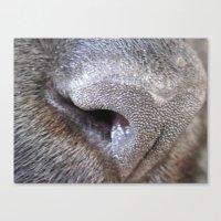 nose Canvas Print
