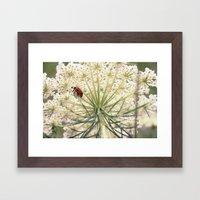 Lacybug Framed Art Print