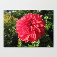 Blooming Just For You Canvas Print