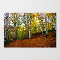 Autumn Trees Woodland Canvas Print