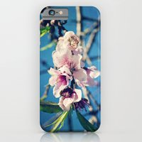 iPhone & iPod Case featuring Nectarine Blossoms by Around the Island (Robin Epstein)