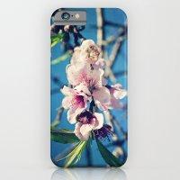 Nectarine Blossoms iPhone 6 Slim Case