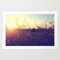 Evening in Summer Art Print