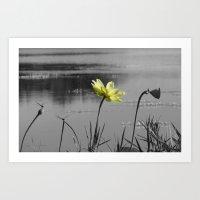 Lotus At Morning Art Print
