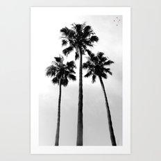 Palm Trees Three Art Print