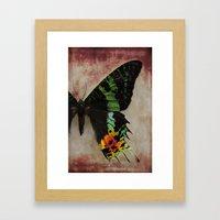 Sunset Moth Wing Framed Art Print