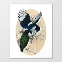 Resplendent Magpie Canvas Print