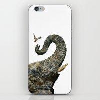 Elephant Cyril And Hummi… iPhone & iPod Skin