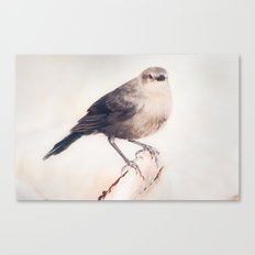 Little Capitola Bird Canvas Print