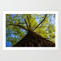 Upward to the canopy Art Print