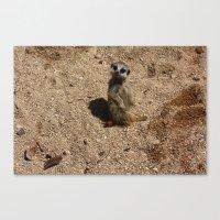 Meerkat Canvas Print