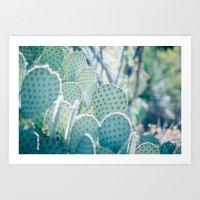 Paddle Cactus Art Print