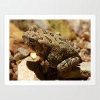 Toad 2015 Art Print