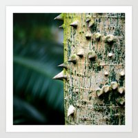 Thorny tree Botanical Photography Art Print