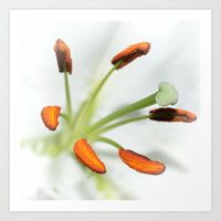 Lily stamen Art Print