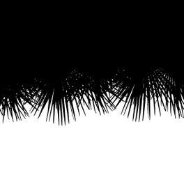 Framed Art Print - Fan Palm - Project M