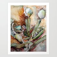 Venus Fly Trap Art Print