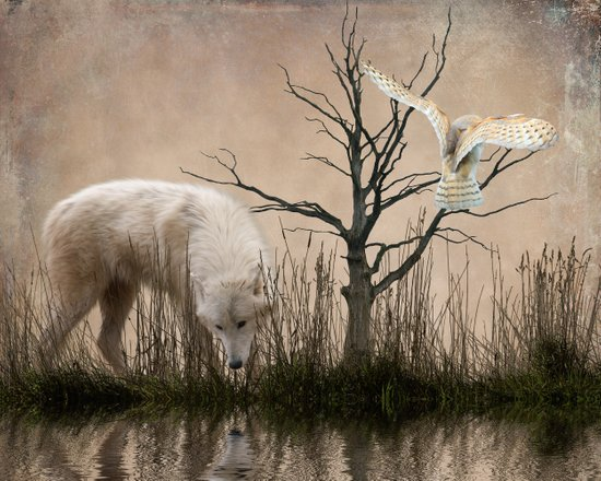 Woodland wolf reflected Art Print