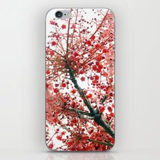 Star Berries iPhone & iPod Skin