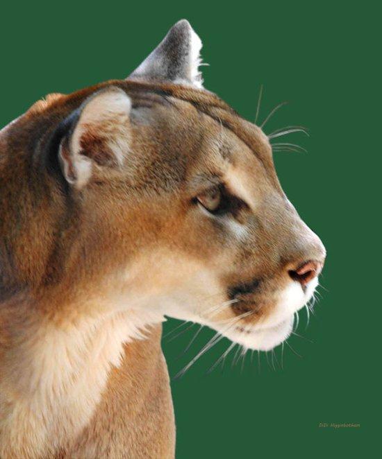 Panther Profile Art Print