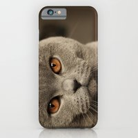 iPhone & iPod Case featuring Diesel, the cat - (close up)  by teddynash