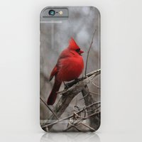 iPhone & iPod Case featuring The Cardinal  by Andrew Sliwinski
