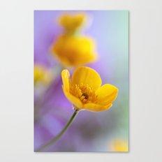 Humble Buttercup Canvas Print