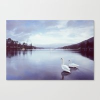 Swans on the shore of Lake Windermere at dawn. Cumbria, UK. (Shot on film). Canvas Print
