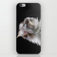 Maine Coon iPhone & iPod Skin