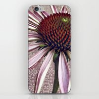 Coneflower Chic iPhone & iPod Skin