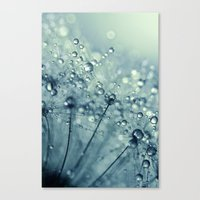 Dandy In Midnight Blue Canvas Print