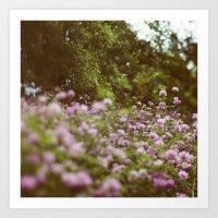 Among the Wildflowers Art Print