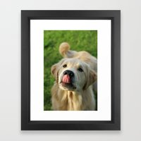 Puppy lickin' love Framed Art Print