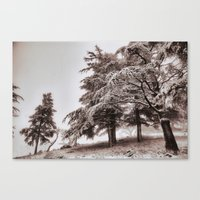 Snowing forest Canvas Print