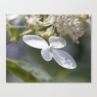 4 petal flower Canvas Print