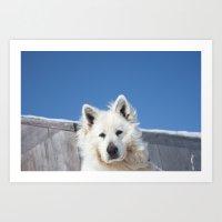 White Husky Art Print